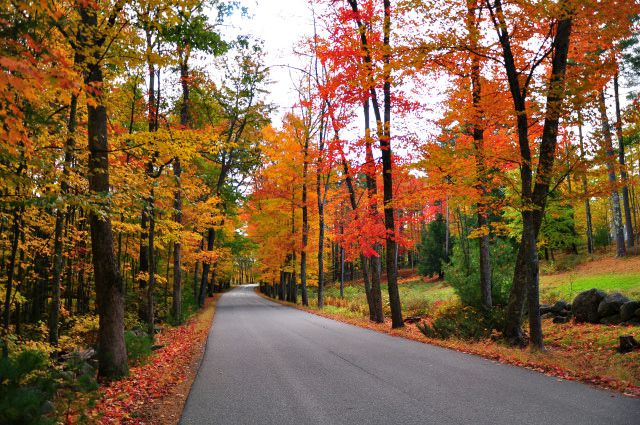 you are guaranteed to love leaf peeping in ct for all the beautiful new england foliage