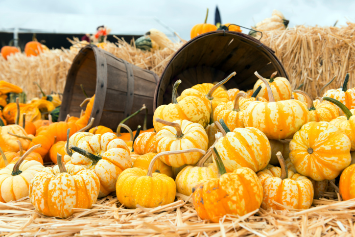 Fall Festivals in CT