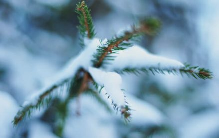 snow on a pine branch on a quick romantic winter weekend getaway from nyc for couples by train