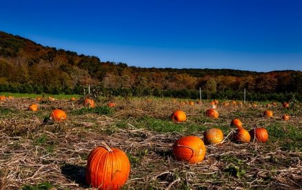 pumpkin patch in the fall in CT