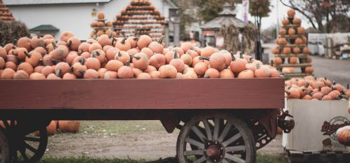 pumpkins displayed at one of the fall festivals in CT