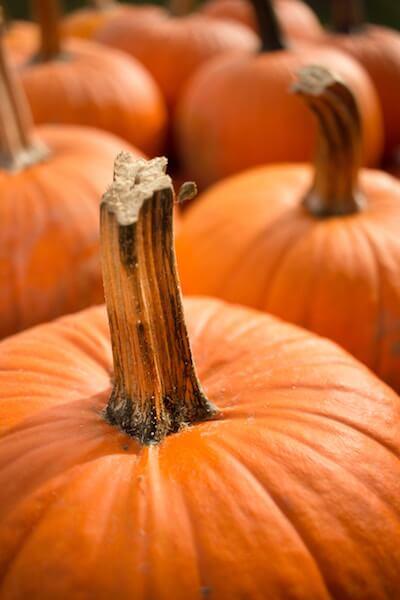 pumpkin picking in november in connecticut
