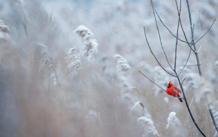 cardinal singing in the winter at one of the best places to visit in ct during winter vacation getaways