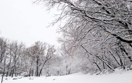 snowy woods in one of the best places to visit in ct during winter vacation getaways