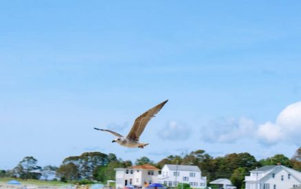 seagull flying over the beach in old lyme, connecticut