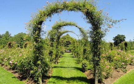 Archway in the Elizabeth Park Rose Gardens