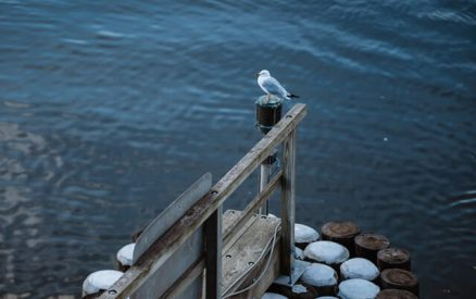 seagull perched on a post near the Thimble Islands of CT